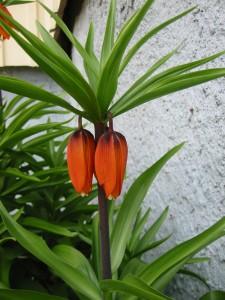 Blommor 009